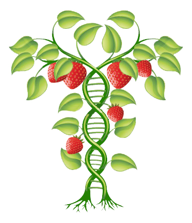 sugars and plant growth data Sugar added to the water given to a plant can help the plant grow faster, bigger, greener and taller, because plants have the process of respiration (the opposite of photosynthesis) which needs glucose, which is sugar, and oxygen to help grow.